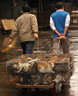 Caged cats. Source: http://www.dailymail.co.uk/news/article-528694/Olympics-clean-Chinese-style-Inside-Beijings-shocking-death-camp-cats.html