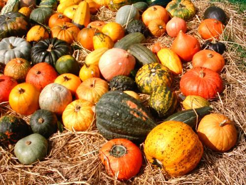 Pumpkins. Source: http://commons.wikimedia.org/wiki/File:Pumpkins_Aachen.JPG