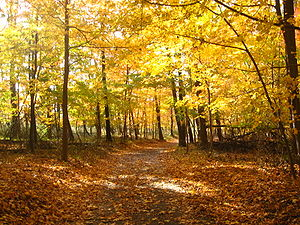 A photo of trees in a forest in New Jersey, Ea...