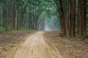 Forest road. Source: http://www.johnharveyphoto.com/India/CorbettNP/ForestRoad.html