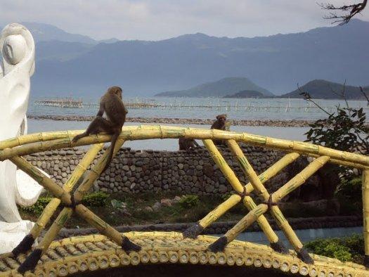 Monkey Island.