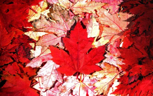 Canadian Maple Leaf Flag