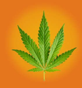 marijuana seed etf