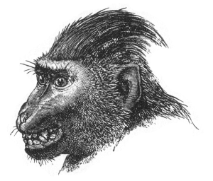 Figure 17 from Charles Darwin's The Expression of the Emotions in Man and Animals.