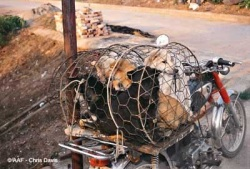 Caged dogs. Source: http://www.animalsasia.org/blog/index.php?entry=entry090218-221648